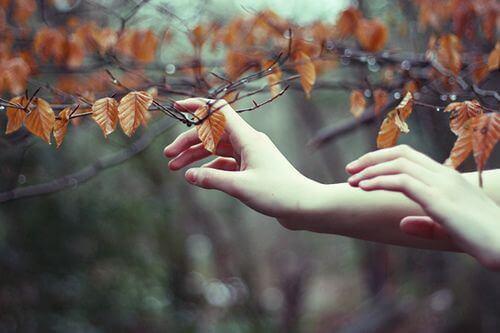 Mains-touchant-des-feuilles