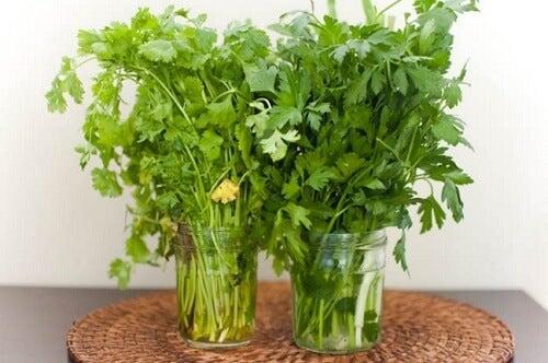 Maintenir-les-herbes-fraiches-500x332
