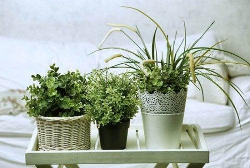 plantes dans la chambre d'amis