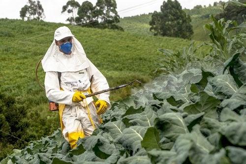 Arrosage des pesticides sur les légumes