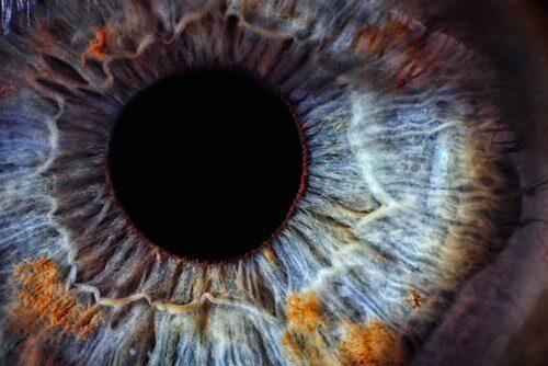 la rétine des yeux