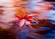 hoja-en-el-agua-representando-el-fluir-de-la-vida