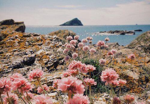 paysage-avec-des-fleurs