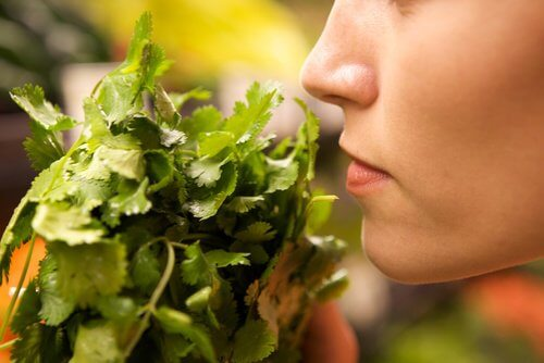 femme qui sent un bouquet d'herbes
