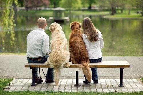un-chien-eduque-par-plusieurs-personnes_eu3lg