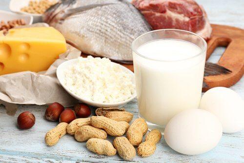 consommation de protéines