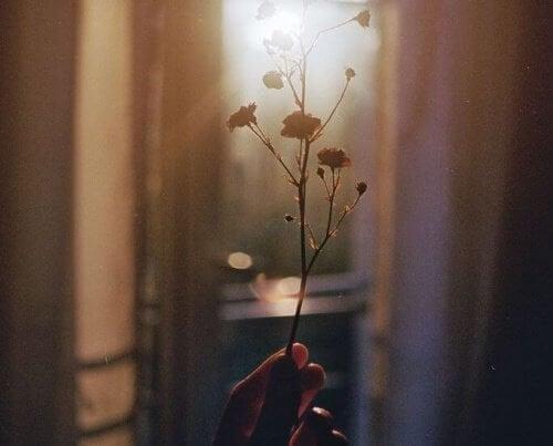 image d'une branche dans la lumière