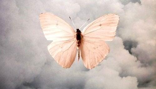 Papillon-500x287