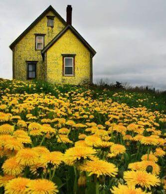 Paysage aux couleurs jaunes