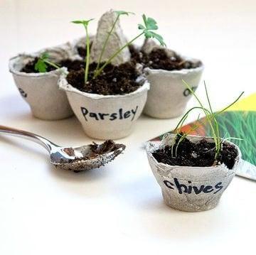 Plants-oeufs