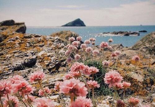 paysage-fleuri-500x346