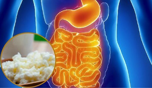 Comment repeupler naturellement la flore intestinale ?