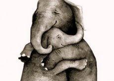 elephant-calins-500x331