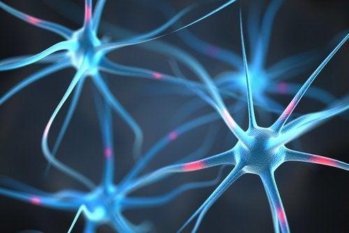 connexions des neurones
