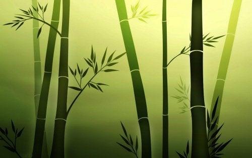 bambou-personnes-resilientes-500x313
