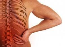 colonne-vertebrale-500x334
