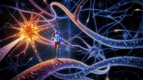 Les 8 meilleurs exercices pour entraîner et augmenter la puissance de votre cerveau