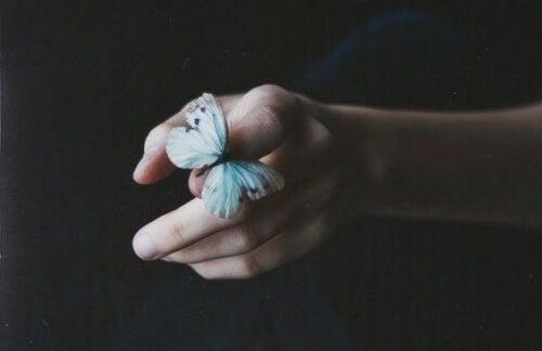 papillon-500x324