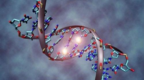 Le cancer est-il héréditaire ? Données à connaître