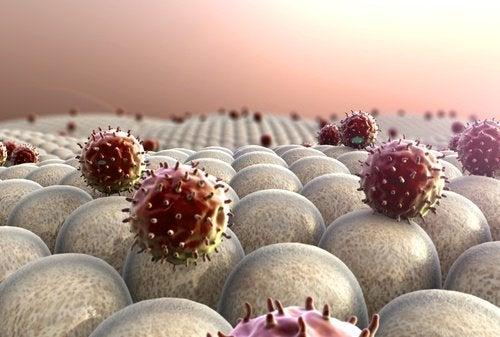 fortifier le système immunitaire