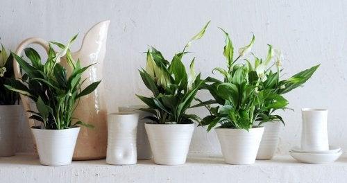 Astuces pour nettoyer vos plantes.