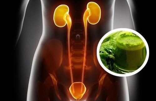 2 jus diurétiques qui vous aident à nettoyer vos reins