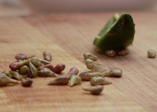 pepins de raisin
