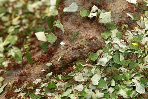 Usages de la cannelle au jardin contre les insectes