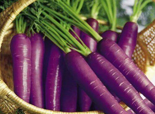 carotte-violette-1