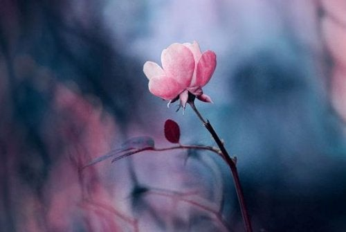fleur-500x335