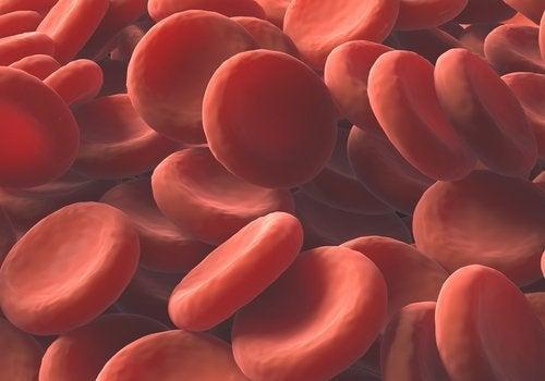 Remèdes naturels pour augmenter les globules rouges