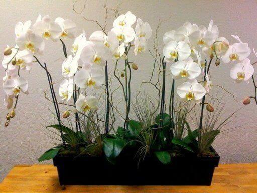Plantes pour la maison : les orchidées.