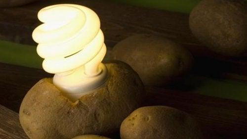 Illuminer votre chambre avec une pomme de terre