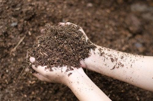 biere-fertilisant-jardin