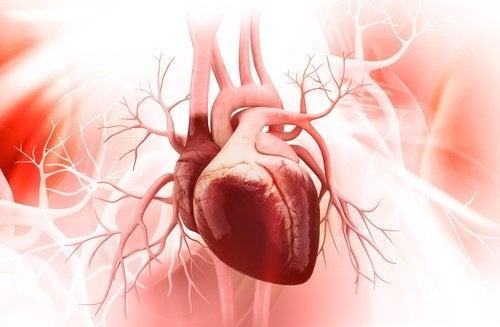 7 astuces pour avoir un cœur sain
