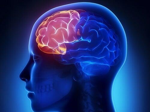 Le cerveau lors du dérèglement hormonal.
