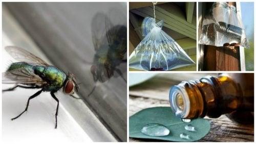 7 solutions maison pour lutter contre les mouches