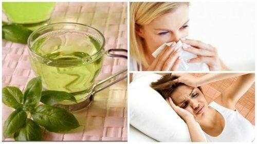 8 bienfaits de la consommation d'infusion au basilic tous les jours