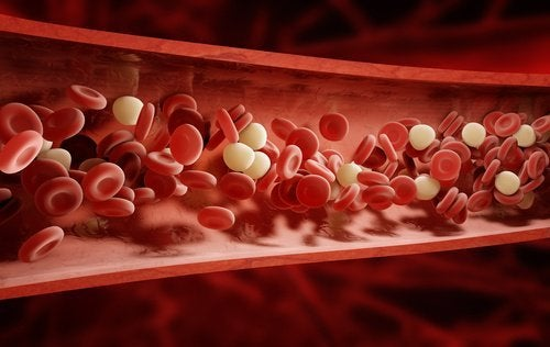 Globules rouges et globules blancs