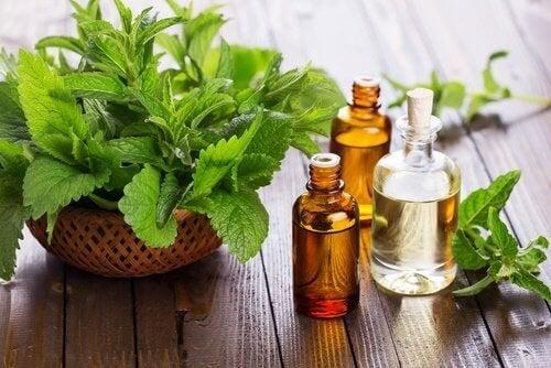 L'huile de menthe aide à soigner les plaies buccales