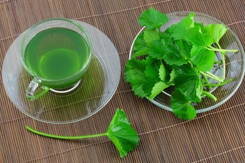 5 bienfaits incroyables que vous obtiendrez en consommant du persil