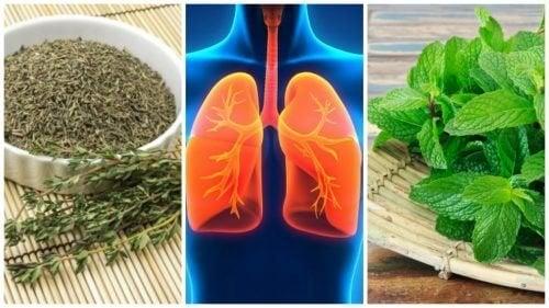8 herbes à utiliser pour améliorer la santé de vos poumons
