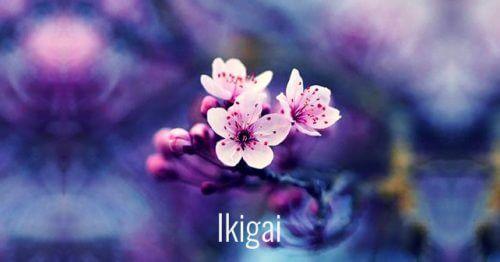 7 mots japonais qui faciliteront votre croissance personnelle. Fabuleux !