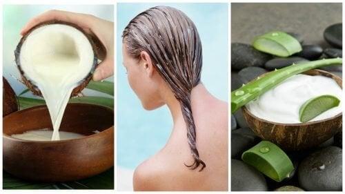Traitement à l'aloe vera et au lait de coco contre la chute des cheveux