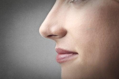 Zoom sur le nez