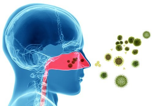 traitement de l'asthme et allergie de printemps