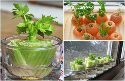 5 légumes que vous pouvez regénérer grâce à de simples astuces