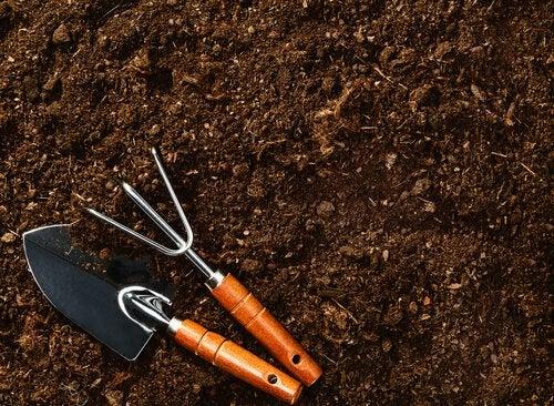 Les canneberges poussent dans un sol acide.