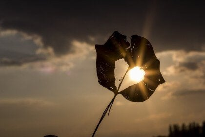 fleur trouée d'un coeur