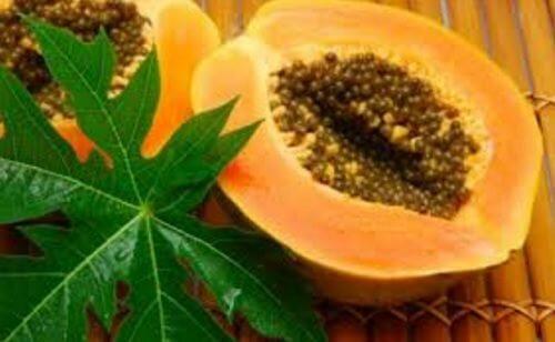 13 bienfaits des feuilles de papaye